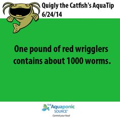 One pound of red wrigglers contains about 1000 worms