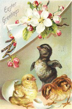 Vintage easter Postcards | Ook nieuwe volgers van harte welkom op mijn blog .. alweer 60 volgers ...
