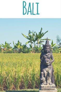 Reisfeld in Ubud, Bali, Indonesien / Bali: Geheimtipps einer Einheimischen auf meinem Reiseblog