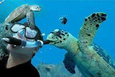 tartarugas mordedorad