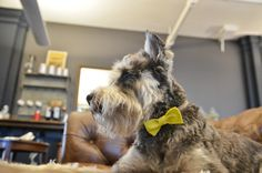 How to Make a Dog Bow Tie - Barkpost - Blog From the Pups at BarkBox