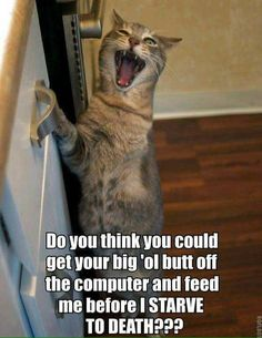 my cats...and pet me while I lay upon your keyboard!