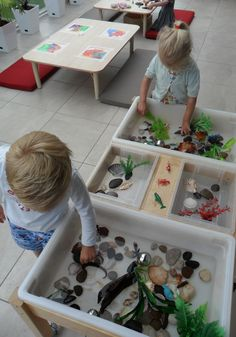 Science and Math - Sieze opportunities to contrast and compare, to use describing words, to sort and classify! Exploring rock pools @ New Horizons Preschool Sensory Boxes, Sensory Table, Kindergarten, Preschool Classroom, Sensory Activities, Toddler Activities, Indoor Activities, Summer Activities, Family Activities