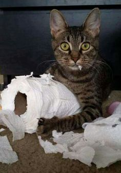 """Yep.....been there....I """"sacrifice at least 2 toilet rolls a week to the great """"cat goddess"""".....that's just how they roll..."""