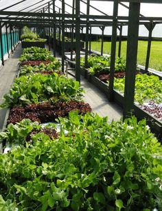 our aquaponic system