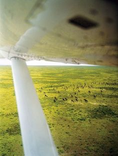The long flight from Arusha to Lake Tanganyika passes over wildebeest herds on the Serengeti and buffalo and hippos in Katavi National Park.
