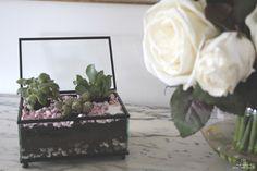mi pequeño oasis en cajita de cristal | Scarlata y el Señor Don Gato II