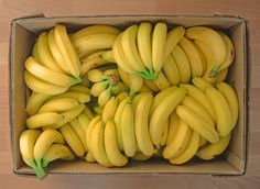 100 beautiful bananas ♥ Should last me a day or two :p Actually, they'll keep me going for 1 week+ depending on what other fruit I have in at the time (my evening meal is generally rice and veggies/leaves). Now got them lined up in anticipation on my ripening shelves! (: