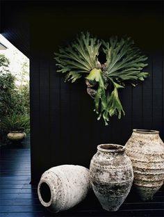 Staghorn fern on black. -- I want a staghorn fern! Green Garden, Garden Pots, Garden Walls, Potted Plants, Indoor Plants, Art Vert, Unique Garden, Olive Jar, Platycerium