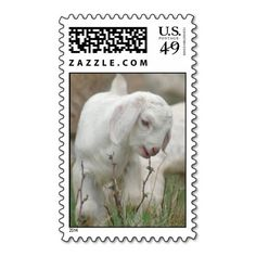 ==>Discount          	Baby Goat Stamp           	Baby Goat Stamp Yes I can say you are on right site we just collected best shopping store that haveDeals          	Baby Goat Stamp Review on the This website by click the button below...Cleck Hot Deals >>> http://www.zazzle.com/baby_goat_stamp-172073004720859772?rf=238627982471231924&zbar=1&tc=terrest