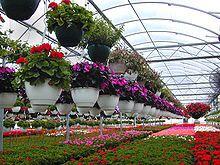 Promoting floriculture - AgriHunt