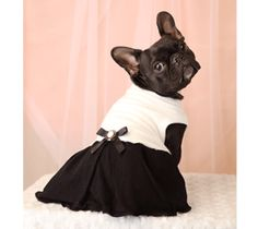 Frenchie dress. His thought-bubble be like dont hate me cuz Im beautiful, hate me cuz your furr-ever friend thinks I am