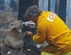 """I love that the man fighting the bushfire is helping the animals, but I especially love that they are holding hands."""