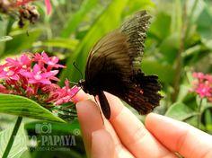 Buterfly - Carlos Arboleda Fotografia - Fotopapaya Photography