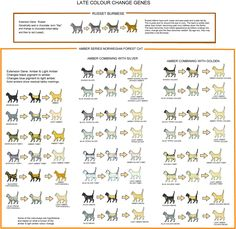 Cat COLOUR AND PATTERN CHARTS and article, very detailed and thorough!