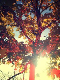 A beleza do Outono