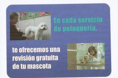 PELUQUERIA CANINA DE CALIDAD CON REVISION VETERINARIA GRATUITA - Empresas Gay Friendly