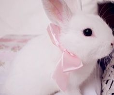Find images and videos about cute, pink and kawaii on We Heart It - the app to get lost in what you love. Baby Animals, Cute Animals, Somebunny Loves You, Cute Baby Bunnies, Fluffy Bunny, Fur Babies, Kittens, Puppies, Princess Anna