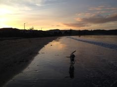 Walking the dog on the beach to a late summer sunset