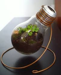 Image result for how to make a steampunk terrarium