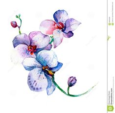 The New View Of Orchid Watercolor Hand Drawn For Postcard - Download From Over 41 Million High Quality Stock Photos, Images, Vectors. Sign up for FREE today. Image: 66505368