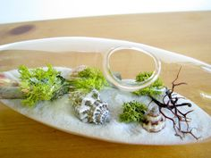 Modern Beach Vessel Lichen Moss Terrarium white or by TinyTerrains