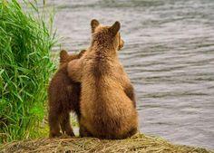 Суровое медвежье обаяние