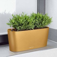 Self-watering planters are a no-brainer for plant serial killers -- but until now most looked like some kind of Frankenstein science experiment. The 8 self-watering planters here mold form and function to be stunning design objects. Target Planters, Tall Planters, Indoor Planters, Indoor Plant Wall, Coral, Self Watering Planter, Decorative Planters, Unique Plants, Plant Decor