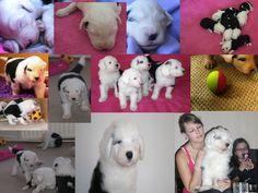 Aydan - Milagro Cachorros Aydan - De eerste 12 weken