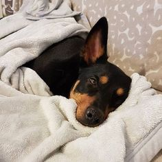 It's cold outside this morning so I'm just going to stay here snuggled up with this blanket I stole from mum and join in . Little Puppies, Its Cold Outside, Make You Smile, Snuggles, Just Go, The Outsiders, Cute Animals, Join, Blanket