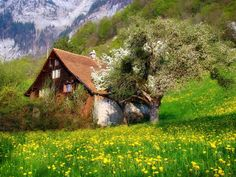 photography, Nature, Landscape, Cottage, Flowers, Spring, Mountains, Trees, Shrubs, Swiss Alps Wallpaper
