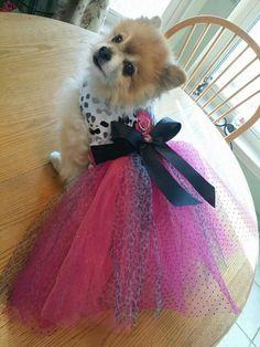 Pet clothing online fb