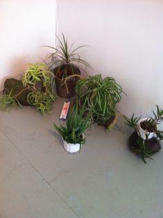 detail Yoga, Detail, Plants, Plant, Planets