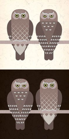 Elf Owls (Micrathene whitneyi) at day and at night.