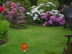 Eure Rosenstämmchen - Seite 18 - Rund um die Rose - Mein schöner Garten online