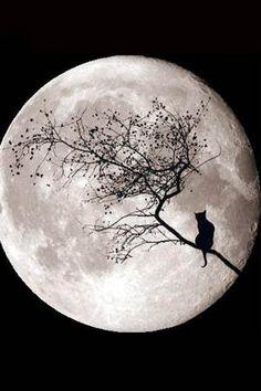 cat and moon - moon Photo