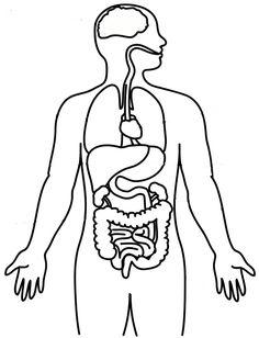 humanbodydiagram full – plik udostępniony w usłudze Box Human Body Organs, Human Body Systems, Human Body Crafts, Educational Websites For Kids, Human Body Drawing, Teen Art, Halloween Activities For Kids, Science Fair Projects, Anatomy Tutorial