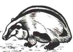 Das - De das leert creatief en succesvol met geweld om te gaan.  De meeste dieren gaan een ontmoeting met de das uit de weg.  Ondanks zijn geringe lichaamsgrootte is hij een gevaarlijke tegenstander.  Zijn wildheid en vechtlust maken hem niet echt geliefd bij andere dieren.