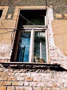 Cat behind window by Roman Rogner on 500px