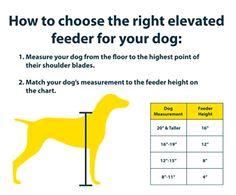 Dog Food Bowls Elevated