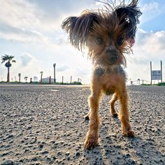 Dog Days of Summer on Galveston Island by Galveston.com, via Flickr