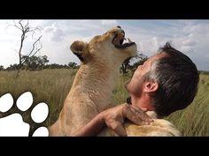 LION HUGGING & The Story of Vayetsi, Livy & Ginny   The Lion Whisperer - YouTube