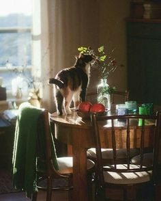 (notitle) The post appeared first on Katzen. Illustration Inspiration, Tier Fotos, Slow Living, Film Photography, Animal Photography, Photography Ideas, Photography Aesthetic, Belle Photo, Country Life