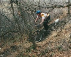 Training a Trail Dog: running while you bike, etc. Mtb Trails, Mountain Bike Trails, Black Mouth Cur, Cool Bicycles, Australian Shepherd, Border Collie, Fly Fishing, Training, Dogs