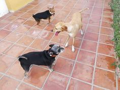 Ratos en casa con Penny, Richie, George, Shifu y Chico 04 /17