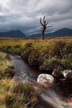 Skeleton tree - Rannoch Moor, Glencoe, Scotland