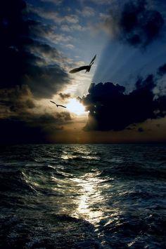 paisaje marino. Gaviotas y un espíritu de aventura es algo maravilloso para vivirse