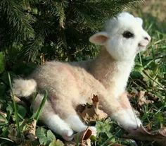 Baby alpaca, too cute
