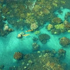 Coral Blook @ Olowalu, Maui   :::sigh::::