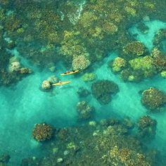 Coral Bloom - Olowalu, Maui                Fancy Isto